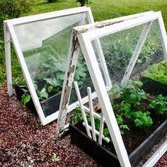 Vanhoista 50-luvun ikkunoista pikkuiset kasvihuoneet tomaatille ja kesäkurpitsoille! :) --> blogissa lisää! // Gamla 50-tals fönstren fick bli små växthus för tomaterna och squachen! :) --> mera i bloggen! #trädgård #trädgårdsland #iträdgården #plantering #planteringsbord #växthus #puutarha #puutarhassa #kasvimaa #kasvihuone #kasvilaatikot #vanhatikkunat #DIY #newblogpost #nyttblogginlägg