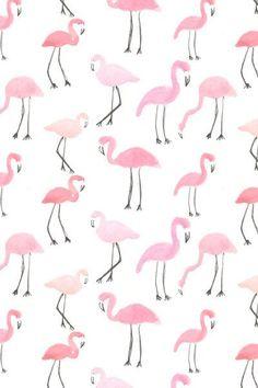 Flamingos | Abby Galloway