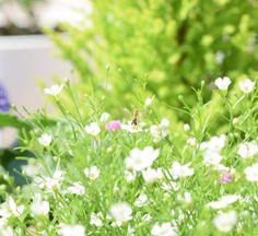 おはようございます◡̈❁ . また月曜日が来ましたが頑張りすぎないように頑張りましょ✨�� . . .  昨夜は町内の会計処理してたら、凡ミスが�� やっぱりそそっかしい私です���� . . 花  #flowers#flowersturk #flowerslovers #flowerstagram #flowers_shotz #flowerstalking #flowerstyles_gf #fav_flowers #ptk_flower#fotocatchers #ig_myshot #ig_nature #instagood #japan_of_insta #jp_gallery #japan_daytime_view #pictureoftheday #picturekeep_flowers #9_vaga_flowersart9 #superbflowers#はなまっぷ . http://gelinshop.com/ipost/1524972519349862297/?code=BUpym08FL-Z