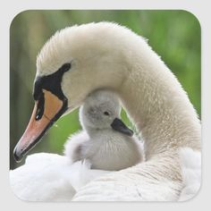 Mother And Baby Animals, Cute Baby Animals, Funny Animals, Animal Babies, Cute Animal Photos, Animal Pictures, Dog Pictures, Beautiful Birds, Animals Beautiful