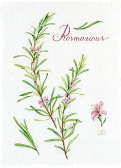 summer pattern for Afisha-Eda by Natalia Tyulkina, via Behance