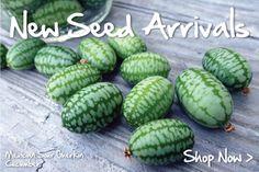 Urban farm seeds non gmo http://www.ufseeds.com/?gclid=CP_I5fHqhb0CFQsSMwod40UAAw   New Garden Seeds