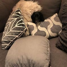 Do you need ALL of those pillows peej? Crazy Dog, Dog Life, Your Dog, Throw Pillows, Dogs, Animals, Toss Pillows, Animais, Animales