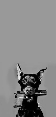 Black And White Picture Wall, Black And White Dog, Black And White Aesthetic, Black And White Pictures, Lion Wallpaper, Cartoon Wallpaper Iphone, Cute Cartoon Wallpapers, Perro Doberman Pinscher, Doberman Dogs