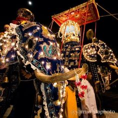 Photo by Michael Yamashita @yamashitaphoto. The most spectacular festival in Asia, the Esala Perahera honors the sacred tooth of Buddha with ten days of parading through the streets of Kandy with colorfully decorated elephants, starts today in Sri Lanka @natgeo