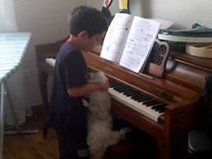 Montreal Piano Lessons, funny lessons. Cat is playing piano