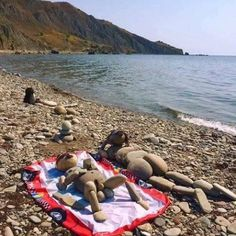 I'm pretty sure these nudists are totally stoned
