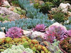 A succulent landscape at Sherman Gardens