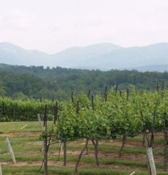 Wine map for georgia