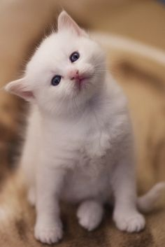 <3 you have cudddle-time for me now? oh Fluffy, I'm afraid if i start , i'll never put you down.. kittens are just cute.