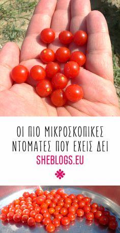 Οι πιο μικροσκοπικές ντομάτες που έχεις δει - Sweet Pea Heirloom tomatoes