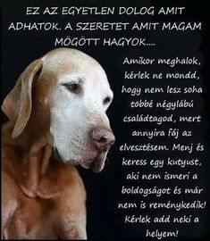 Animals And Pets, Cute Animals, Animal Templates, Hyena, Vizsla, Buddhism, Dog Love, Cute Dogs, Quotations
