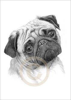 pencil drawings of cats | Dog Pug Art Pencil Drawing Print A4 Signed Edition Artwork | eBay