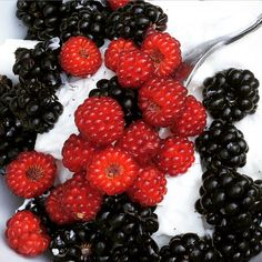 Blackberry, Japanese wineberry and yoghurt