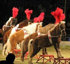 Carson & Barnes Circus 2009