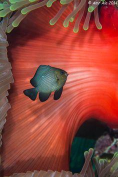 Sea Life  -Photo By Amr Ala