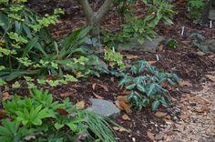 Spring!  Woodland Garden at Juniper Level Botanic Garden. http://anitaavent.me/