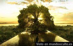 Sabías que hay un Árbol que Sostiene toda la Vida?