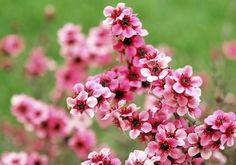 January Tips for Your Garden! #garden #gardening #flowers