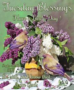 Good Morning Boyfriend Quotes, Free Happy Birthday Cards, Morning Blessings, Tuesday Morning, Psalms, Blessed, Bird, Inspirational Quotes, Facebook