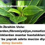 Defne yaprağı ve defne tohumu mucizesi