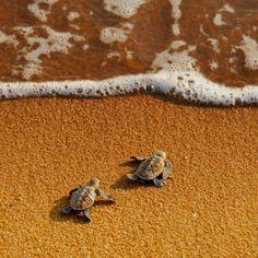 precious. baby. Turtles.