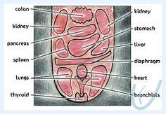 Eightfold Examination in Ayurveda jhiva pariksha or tongue diagnosis Ayurvedic Oil, Ayurvedic Recipes, Health Heal, Thyroid Health, Tongue Sores, Sore Tongue, Tongue Health, At Home Abs, Human Anatomy And Physiology