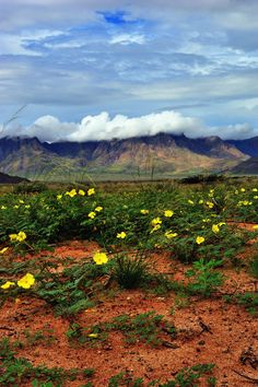 """Desert Blooms"" ~ Namib desert, Namibia, Southern Africa [photo by Rosemary Walden, Namibia]...."
