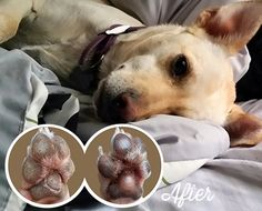 Natural dog company treatments will heal your dog's dry nose and rough paws in days. Organic, vegan, moisturizing and 100% natural. Vet recommended.  Get 10% off all products using code:Skinsoother16