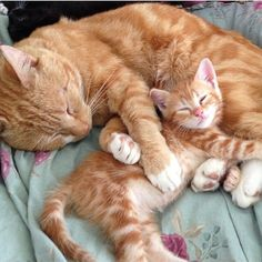 father and son by thedailykitten