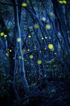 Kato Fumio, photographer, Outstanding Performance Award - Nature's Best Photography Japan 2013