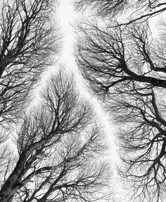 Winter forest trees black and white naturewall art por Chachaprints