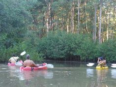 Matapalo Beach Kayaking |http://portasol.cr/en/