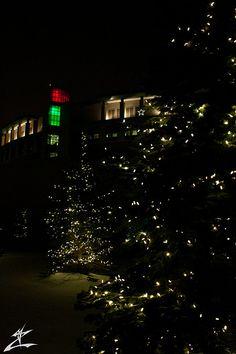 Lighted Night