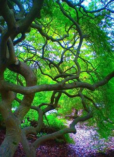funky tree color, art photography, japanes mapl, green, natur, trees, tree branches, tree art, garden
