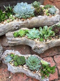 29 rock garden and backyard ideas landscaping for make you happy 6 beautiful front yard rock garden landscaping ideas Succulent Gardening, Planting Succulents, Container Gardening, Succulent Rock Garden, Succulent Arrangements, Succulents Diy, Succulent Ideas, Succulent Containers, Succulent Planters