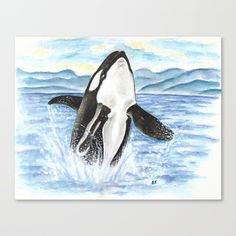 Die 31 Besten Bilder Von Orcas Dolphins Killer Whales Und Orcas