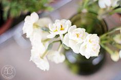 Oravanpesä   Perunanarsissi Narcissus 'Bridal Crown'