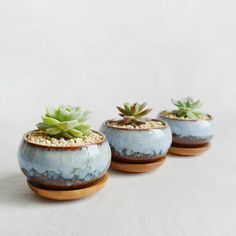 Glazed porcelain succulent planter. With a stand made of bamboo. Perfect on a dining table, a coffee table, a bookshelf, or on an office desktop.