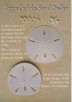Legend of the Sand Dollar - This makes me smile. My daddy always wore his gold sand dollar necklace.
