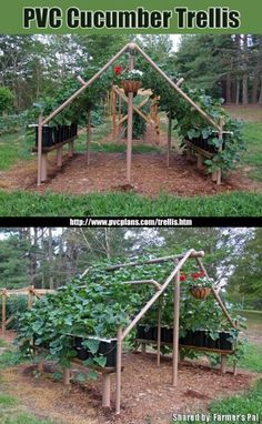 Trellis gardening, direct sun plants on outside, shaded plants on the inside --even doubles as a playhouse! PVC Cucumber Trellis I can see using this for many garden plants and gourds
