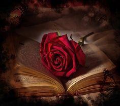 Flower on a book | by Tarek khouzam.