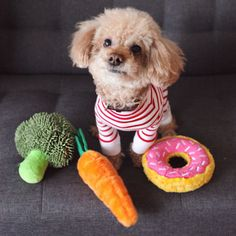 Understanding the nutritional needs of your fluffy canine companion will help you pick out the best dog food for your poodle. Vegetarian Dog Food Recipe, Dog Food Recipes, Best Dog Food, Best Dogs, Gg Crackers, National Donut Day, Pet Furniture, Dog Eating, New Puppy