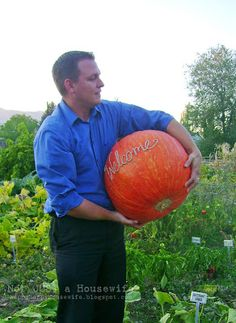 Scratching pumpkins so they scar! Click for details how.