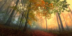 free pictures forest - forest category