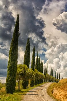 Cypress row in Val d'Orcia - Tuscany, Italy
