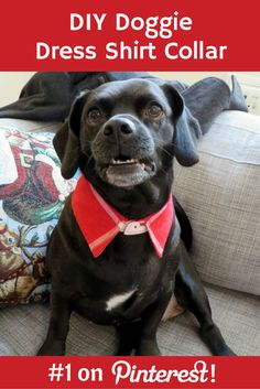DIY upcycled collared dress shirt dog collar craft | The Cheerful Times