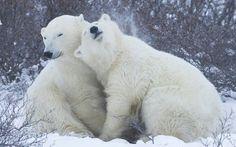 Bonita pareja de osos!