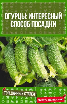 45 Affordable DIY Design Ideas for a Vegetable Garden Harvest Day, Small Farm, Diet And Nutrition, Amazing Gardens, Diy Design, Design Ideas, Cactus Plants, Vegetable Garden, Cucumber