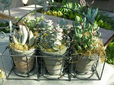 Succulent Style offers creative arrangements for home, garden, events or special gifts.